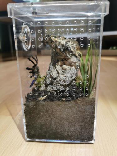 Sling box ARBOREA